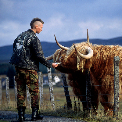 Punkwith mohawk feeding Scottish cow in Dalwhinnie, Scotland.